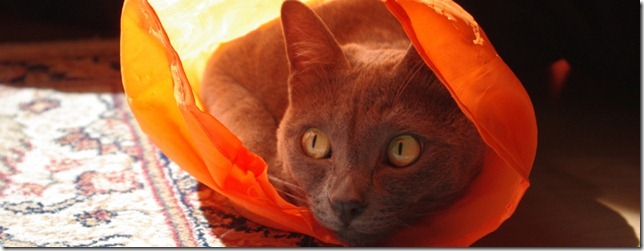 korat_cats_header1